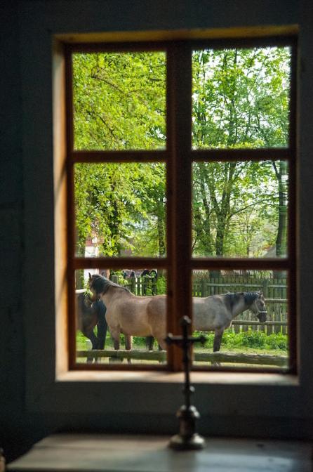 農村エリアでは、当時から生活を共にしていた馬やロバが。